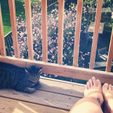 The upper deck, w/cat